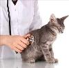 Ветеринарные клиники в Нарткале